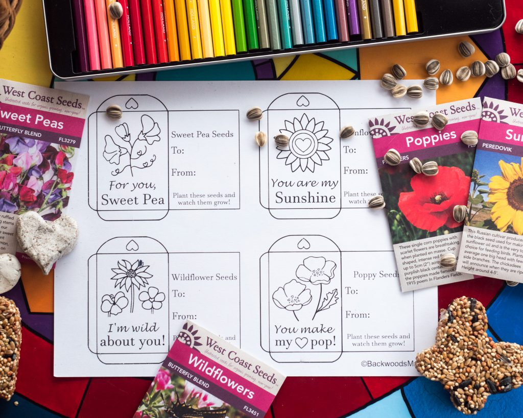Kids Flower Seed Collections 4 in 1 pack